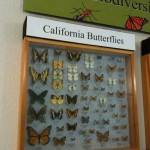 butterfly exhibit